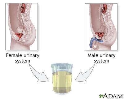 definition of urine